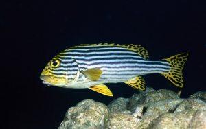 CD45 – Beautiful Life Under the Sea