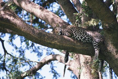 CD06 – Nature, wildlife & Evironment