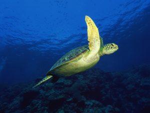CD51 – Deep Blue Sea Nature
