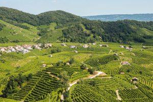 Vineyards on the hills of Valdobbiadene, production zone of sparkling prosecco wine