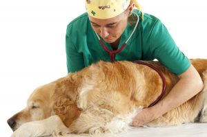 Veterinary consultation and a follow a dog