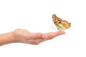 Woman hand holding a beautiful butterfly isolated on a white background