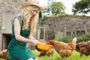 Young blonde feeding her chickens kneeling on the grass