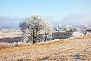 Frozen winter landscape with hoarfrost