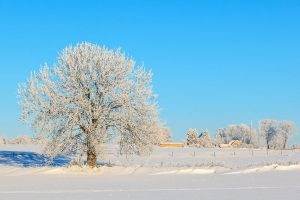 Tree in winter landscape with snow