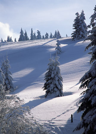 CD16 – Winter